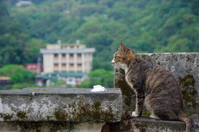 A cat in Houtong, Taiwan