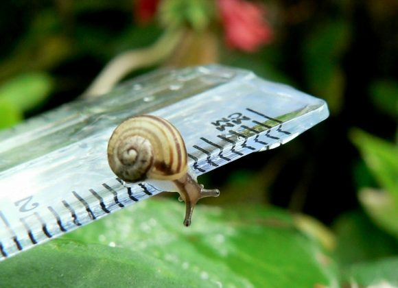 A snail on a ruler