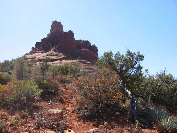 A twisted Juniper tree near a rock formation in Sedona, Arizona