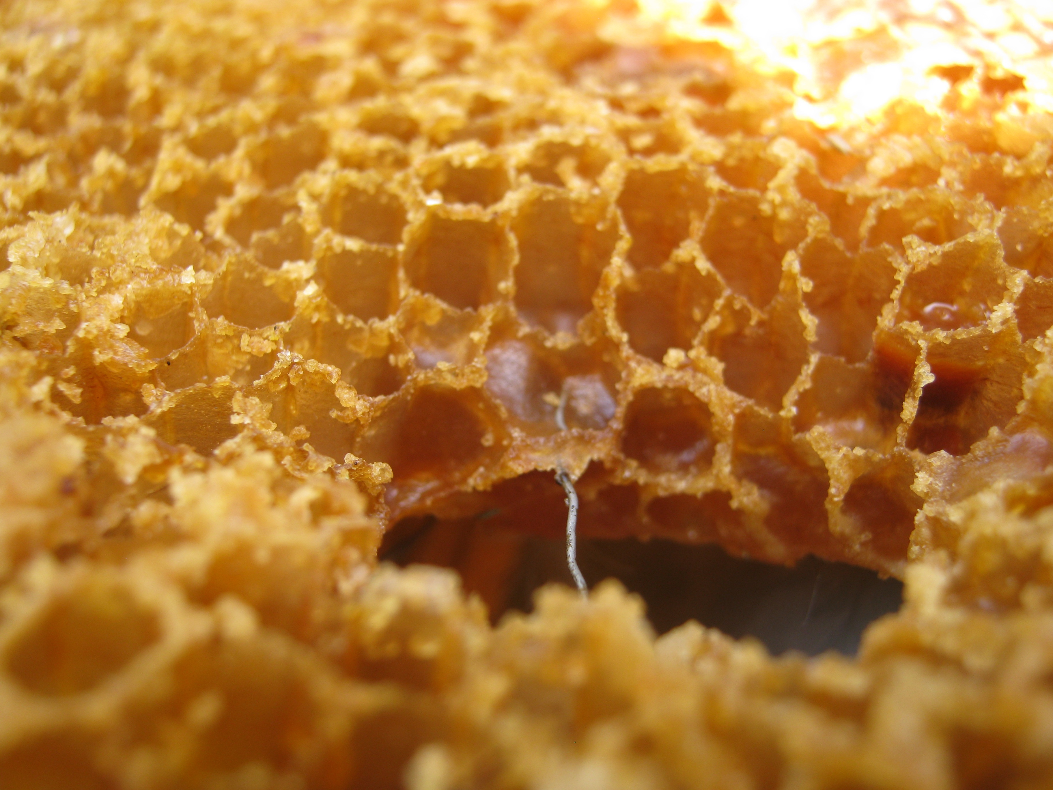 Honey as Medicine | Interesting Thing of the Day