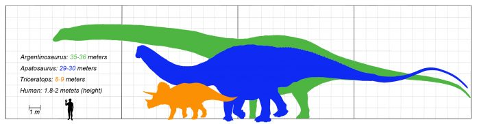 Size comparison: Argentinosaurus (green), Apatosaurus (blue), Triceratops (orange)