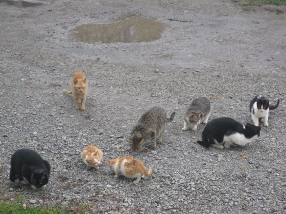 A herd of cats