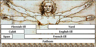 Vitruvian Man Measurements