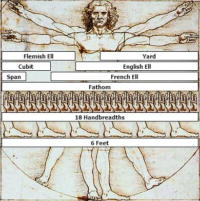 Vitruvian Man Measurements