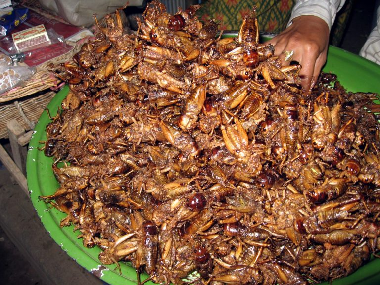 Fried crickets in Cambodia
